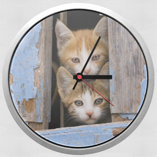 Cute curious kittens in an old window para Reloj de pared