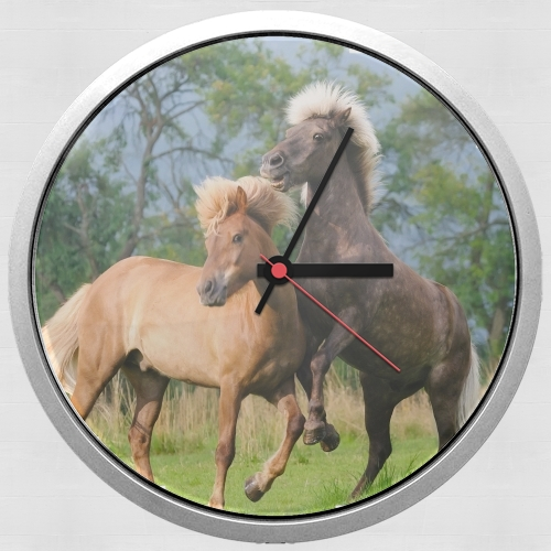 Two Icelandic horses playing, rearing and frolic around in a meadow para Reloj de pared