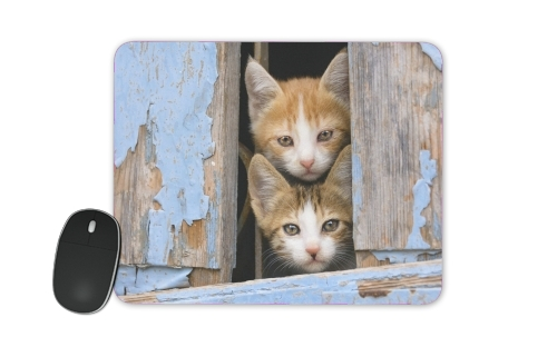 Cute curious kittens in an old window para alfombrillas raton