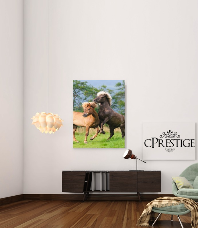 Two Icelandic horses playing, rearing and frolic around in a meadow para Poster adhesivas 30 * 40 cm